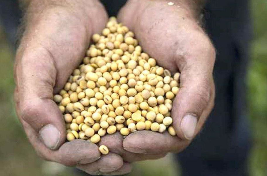 Soybeans Become Abundant Harvest Results in the Kingston Market